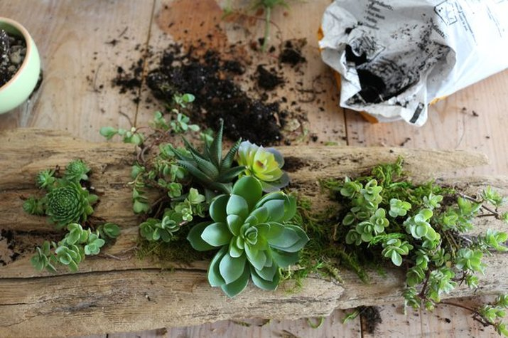 Bring outdoor elements inside with this DIY driftwood planter