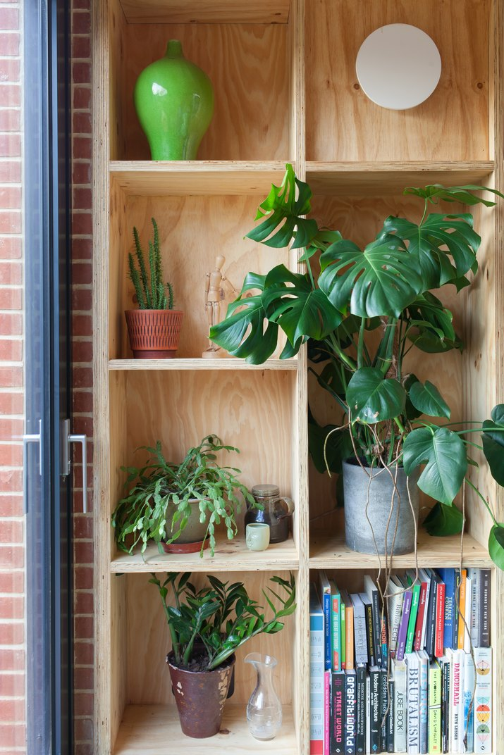 plants and books on plywood shelves