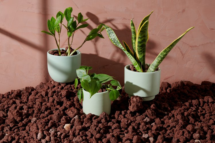 The Sill Beginner's Plants Collection, $110.50
