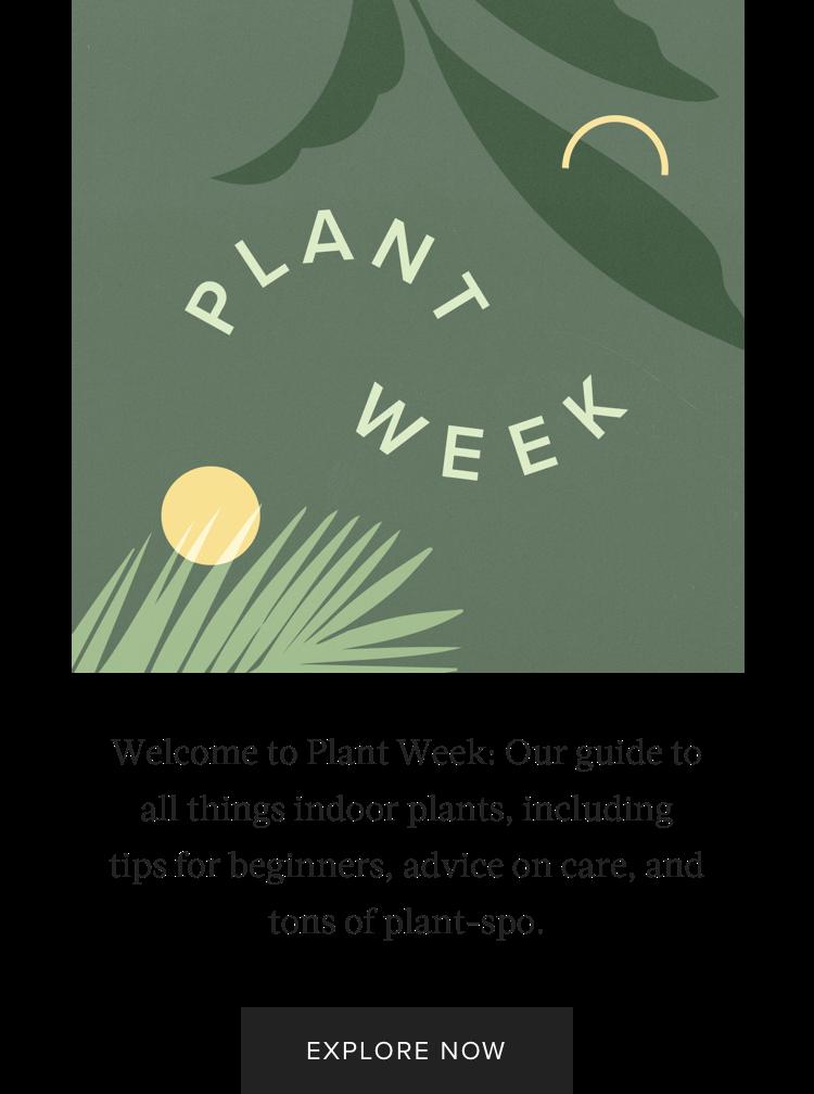 Hunker Series: Plant Week