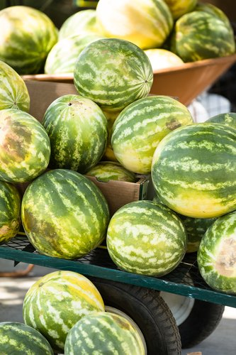 Fresh watermelons from the garden