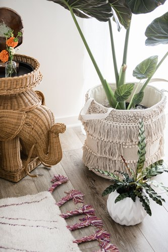 Plants and wicker